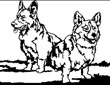 Corgis, drawing by Jack Knight